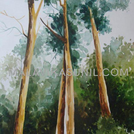 09-Tall-trees