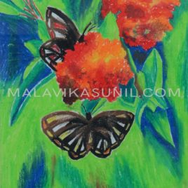 BUTTERFLY ON THE FLOWERS_OIL PASTELS